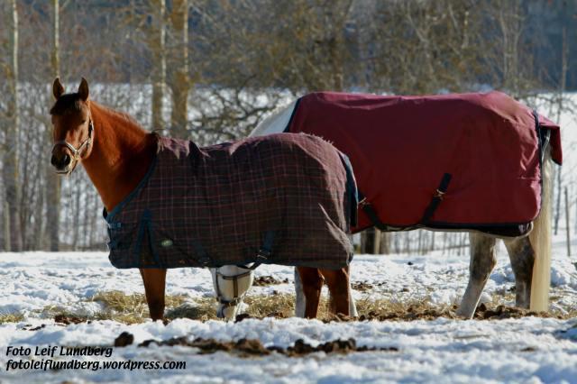 """""""Titta vilka fina hästar"""", som min syster alltid sa när hon var liten."""